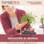 Curso gratis bonsai