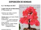 Bonsai exhibition and workshops in Zaragoza