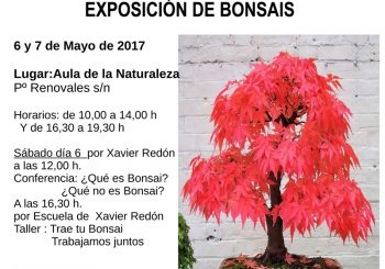Exposición y talleres de bonsai en Zaragoza