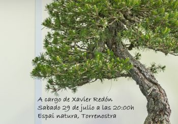 Conferencia de bonsai en Torrenostra